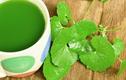 Loạt tác dụng thần kỳ của rau má đối với sức khỏe