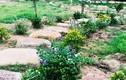 Khi về thăm chồng, vợ sững sờ thấy cảnh trong vườn