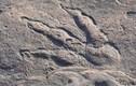 Cô bé 4 tuổi phát hiện dấu vết của khủng long 220 triệu năm