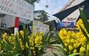 Tiểu thương buôn hoa Tết đồng loạt giảm giá kịch sàn