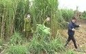 2 anh em trồng gần 350 cây thuốc phiện trong vườn nhà