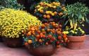 Bạn có biết chưng hoa Tết gì vừa đẹp vừa tốt cho sức khỏe?