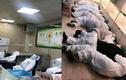Dịch corona 12/2: 500 nhân viên y tế TQ mắc bệnh, 38 học sinh Vĩnh Phúc ho, khó thở
