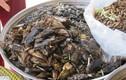 Món ăn từ cà niễng - đặc sản côn trùng tưởng sợ mà ngon