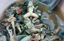 """""""Khóc thét"""" món nòng nọc ếch ướp cay kinh dị của Thái Lan"""