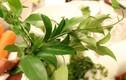 Những đặc sản rau rừng tên lạ nhưng ăn dễ nghiện