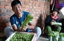 Cất bằng kinh doanh quốc tế, 9X về làng trồng rau, kiếm tiền tỷ