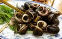 Món ngon từ ốc núi đá Ninh Bình khiến du khách tấm tắc khen