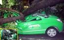 Ai chịu trách nhiệm vụ cây đổ đè chết lái xe taxi?