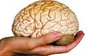 Thực hư việc ăn não động vật tăng cường trí nhớ