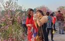 Người dân Quảng Ninh ngắm hoa Xuân, tạm quên mệt mỏi vì COVID-19