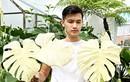 Thú chơi xa xỉ nhà giàu Việt: Chi trăm tỷ mua… 1 chiếc lá