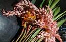 Hoa dại bờ bụi giá siêu đắt đỏ, mối buôn bán 2.000 cành/ngày