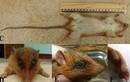 Khám phá mới về động vật ở Việt Nam 2014