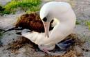 """""""Cụ"""" chim hoang dã đẻ trứng thứ 36 ở tuổi 63"""