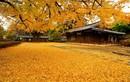 Giới trẻ Việt phát thèm cảnh đẹp mùa thu Hàn Quốc