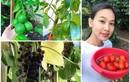 Mãn nhãn vườn rau quả trĩu cành trong nhà Hoa hậu Việt ở trời Tây