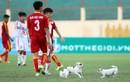 Cầu thủ U19 bị chó cắn giữa trận bóng