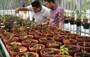 Vườn lan đột biến 80 tỷ ở Cần Thơ