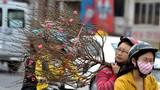Dự báo thời tiết 6/2: Miền Bắc ấm áp đón Tết