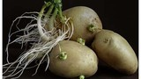 7 loại rau củ độc hại mà bạn vẫn ăn hằng ngày