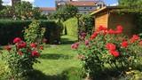 Khu vườn rợp hoa hồng đẹp mê ly của mẹ Việt ở Đức