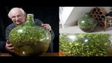 Video: Vườn cây tí hon sống hơn nửa thế kỷ trong bình kín