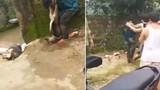 """Video: """"Cẩu tặc"""" bị đánh hội đồng, treo xác chó lên cổ"""