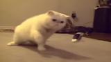 Kịch tính đại chiến giữa mèo và máy bay