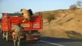 Màn ăn trộm cừu siêu đẳng như phim hành động