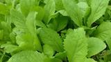 6 thực phẩm giúp phòng chống dị ứng thời tiết hiệu quả