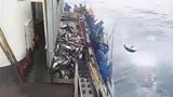 Thích thú xem cần thủ câu cá giữa đại dương chớp nhoáng