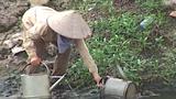 Vườn rau xanh non, tươi tốt tưới bằng nước sông Tô Lịch