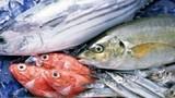 Cách phân biệt cá sạch và cá tẩm hóa chất
