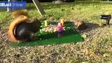 Video: Sóc láu cá dùng lò xo bắn tung đối thủ giành thức ăn