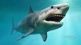 Cá mập hung thần đại dương nhưng lại lép vế trước loài này