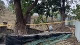 Rợn người bé sơ sinh bị bỏ lại ở nghĩa trang, nghi bị chó hoang cắn xé