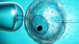 Trẻ sinh ra trong ống nghiệm dễ bị ung thư sớm
