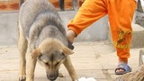 Khám phá 10 điều quan trọng để tránh chó cắn ai cũng cần