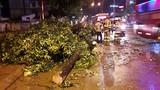 Cây xanh gãy đổ trong mưa lớn ở Hà Nội