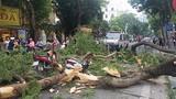 Kinh hoàng cây xanh gãy đổ đè 5 người đang đi đường ở Hà Nội