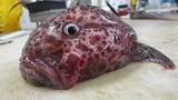 Loạt ảnh thủy quái kỳ dị khó tưởng tượng dưới biển sâu