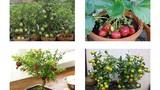 Mách bạn 8 loại cây ăn quả trồng chậu lớn nhanh như thổi