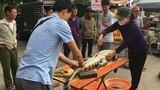 Video: Cận cảnh chích điện, mổ thịt cá sấu ở bến xe