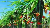 Nông nghiệp Hoàng Anh Gia Lai đã có lãi trong quý 1 nhưng còn tồn vấn đề gì?
