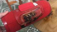 Sạc thiết bị điện tử sai cách dễ khiến pin phát nổ