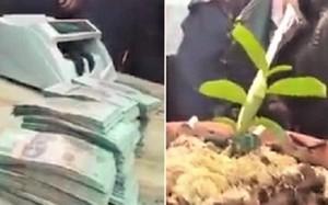 Xác minh vụ lan đột biến Hồng Bồng Lai được bán với giá 1,6 tỷ đồng