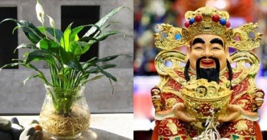 6 loại cây cảnh phong thủy là con cưng của Thần Tài