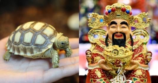 6 con vật là đệ tử của Thần Tài, nuôi trong nhà để rước tài lộc