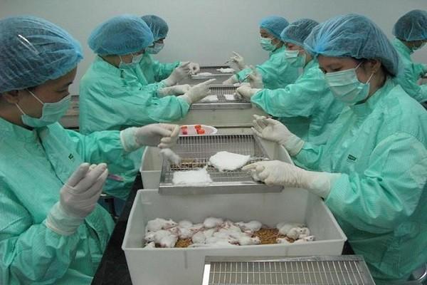 Viet Nam thu nghiem thanh cong vaccine Covid-19 tren chuot